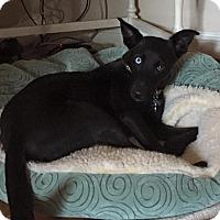 Adopt A Pet :: Luna - Midlothian, VA