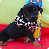 Adopt A Pet :: Jenga - Irvine, CA