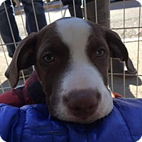 Adopt A Pet :: Newman - Pittsburgh, PA
