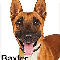 Adopt A Pet :: Baxter - Scottsdale, AZ