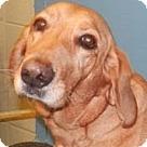 Adopt A Pet :: Danny