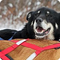 Adopt A Pet :: Lucky - Jefferson, NH