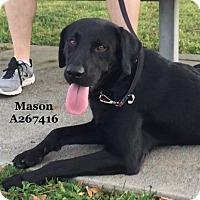 Adopt A Pet :: VADER - Conroe, TX