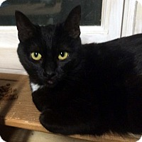 Adopt A Pet :: Ruffles - Lombard, IL