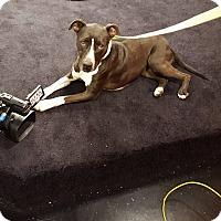 Adopt A Pet :: Lacy - Fincastle, VA