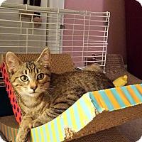 Adopt A Pet :: Fargo - Chelsea - Kalamazoo, MI