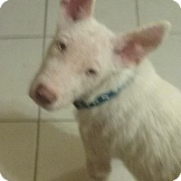 Adopt A Pet :: BUDDY-16 Weeki Wachee FL - Lithia, FL