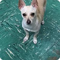 Adopt A Pet :: Sunny - Saddle Brook, NJ