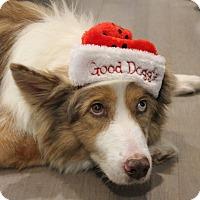 Adopt A Pet :: Hope - Allen, TX