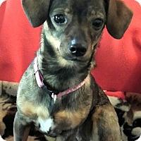 Adopt A Pet :: Bambi-Take me home - Victorville, CA