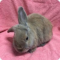 Adopt A Pet :: John Watson - Wheaton, IL