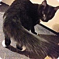Adopt A Pet :: Lillian - Williston Park, NY