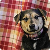 Adopt A Pet :: Snookie - Roosevelt, UT