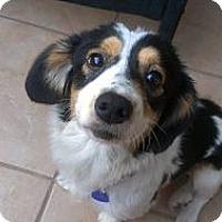 Adopt A Pet :: Hannah - Santa Barbara, CA