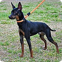 Adopt A Pet :: Sebastian - Myersville, MD