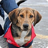 Adopt A Pet :: Buffy - Douglas, ON