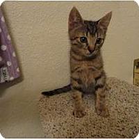 Adopt A Pet :: Vince - Phoenix, AZ