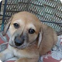 Adopt A Pet :: Esty - Austin, TX