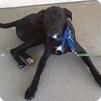 Adopt A Pet :: Benny - Piqua, OH