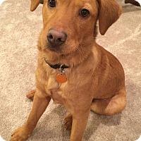 Adopt A Pet :: Abel - Allentown, PA
