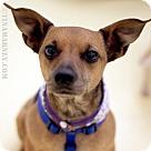 Adopt A Pet :: Little Bit!