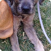 Adopt A Pet :: Tammy - Van Nuys, CA