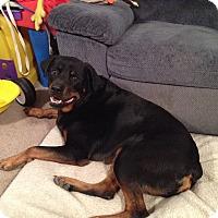 Adopt A Pet :: Abel - Frederick, PA