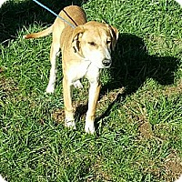 Adopt A Pet :: Ina - Sussex, NJ