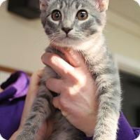 Adopt A Pet :: Flora - Knoxville, TN