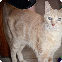 Adopt A Pet :: Eggnog - San Antonio, TX