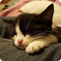 Adopt A Pet :: Risotto - McDonough, GA