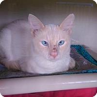 Adopt A Pet :: Mr. Meowsalot - Fort Collins, CO