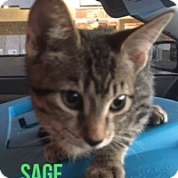Adopt A Pet :: SAGE - Glendale, AZ