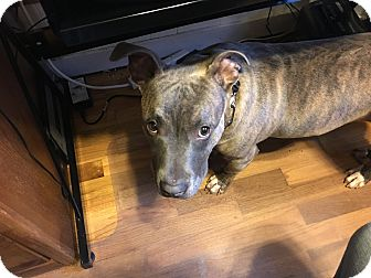 Dog Rescue Grand Rapids M