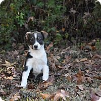 Adopt A Pet :: Rudy - Groton, MA