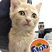 Adopt A Pet :: Fanta - Topeka, KS