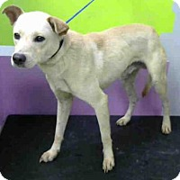 Adopt A Pet :: A1433147 - Houston, TX