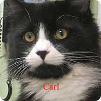 Adopt A Pet :: Karl - Warren, PA