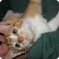 Adopt A Pet :: Monsoon - Colonial Heights, VA