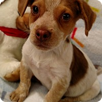 Adopt A Pet :: Mason - Homewood, AL