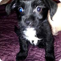 Adopt A Pet :: Bunny - Tijeras, NM