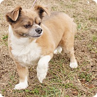 Adopt A Pet :: Charlie - Maynardville, TN