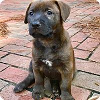 Adopt A Pet :: Rosemary - Plainfield, CT