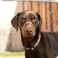 Adopt A Pet :: Tripp - Fort Worth, TX