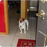 Adopt A Pet :: Spike in Houston - Houston, TX