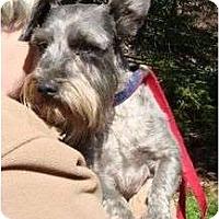 Adopt A Pet :: Zeke - Staunton, VA