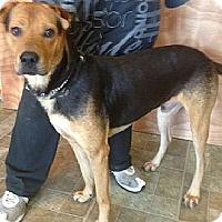 Adopt A Pet :: Neo - ....., FL