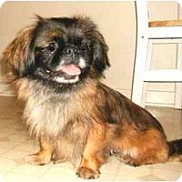 Adopt A Pet :: Alyssa - Mooy, AL