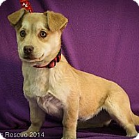 Adopt A Pet :: Gretel - Broomfield, CO