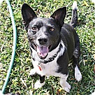 Adopt A Pet :: Jackson - 23 lbs!